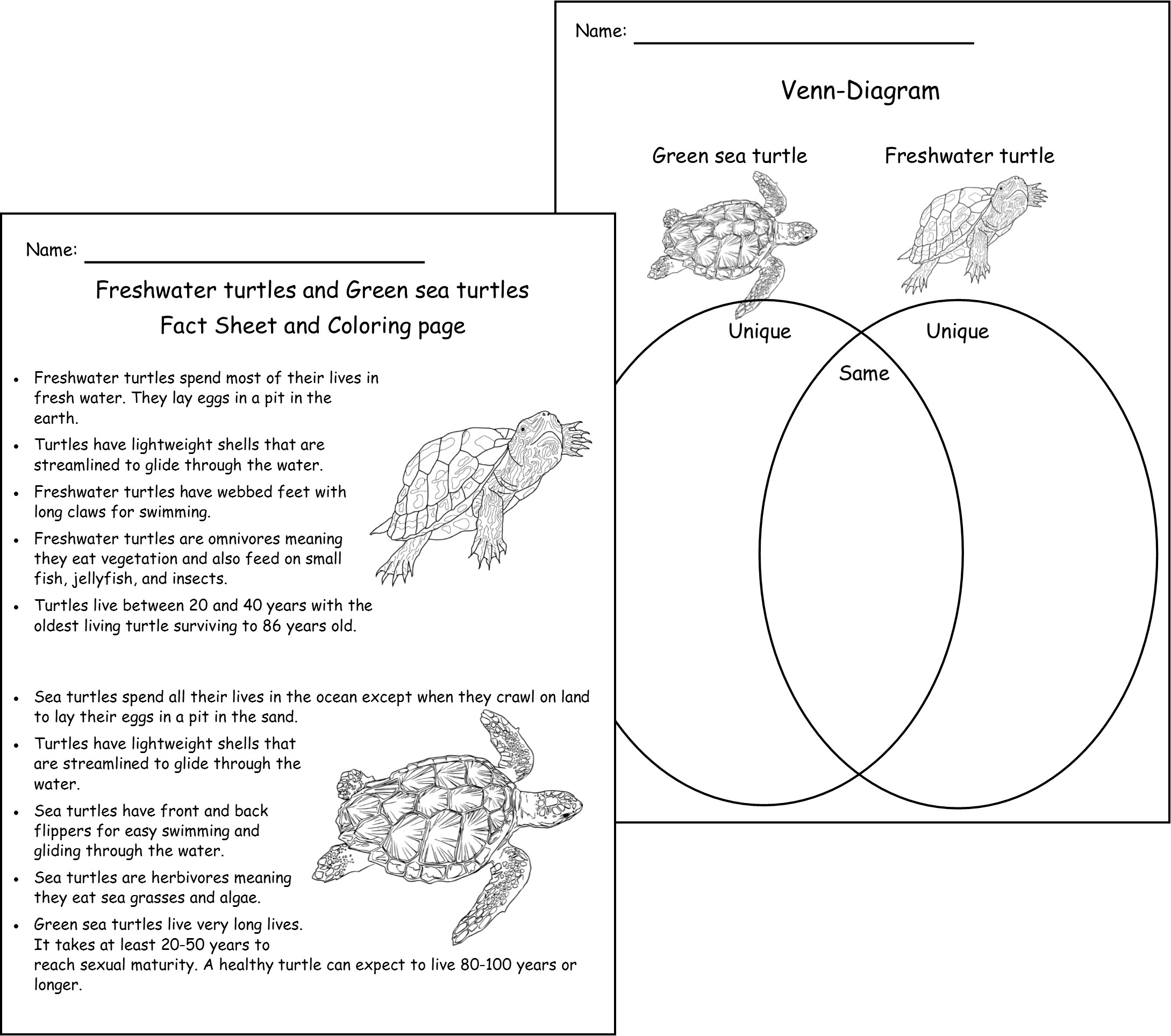 don u0027t call me turtle u2013 lyric power publishing u2014 children u0027s books