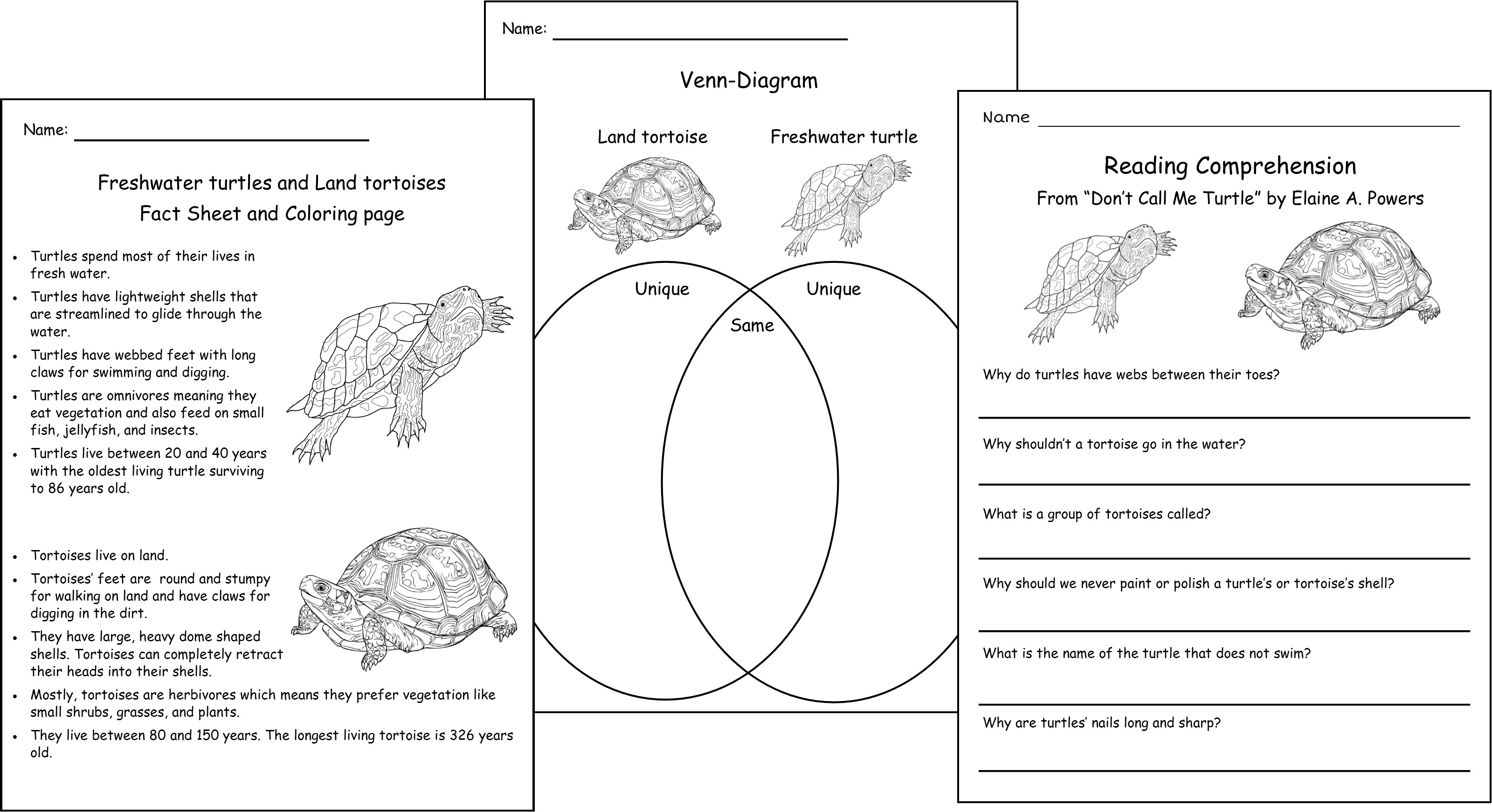 turtle anatomy diagram image collections human anatomy learning