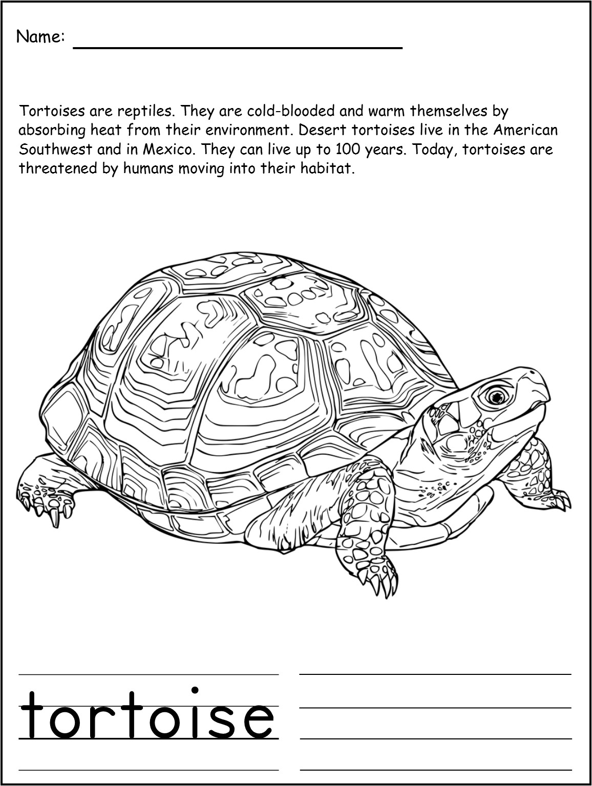 don u0027t call me turtle u2013 lyric power publishing u2014 children u0027s books