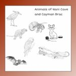 My Book About the Animals of Nani Cave Grades Pre-K – K, 16 Pages