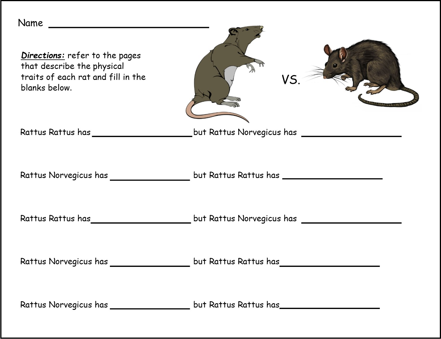 my book about bats and rats grades k