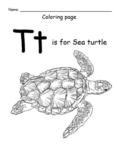 "An illustration of a green sea turtle with the letter ""T"""