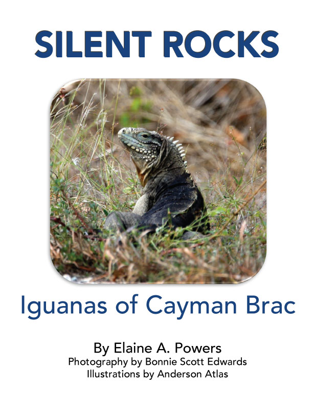 "cover of book ""Silent Rocks."" white background, rock iguana pictured in natural habitat on island Cayman Brac"