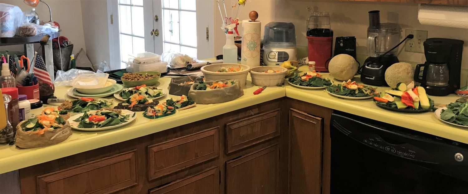 16 salad plates to feed to reptiles on a kitchen counter