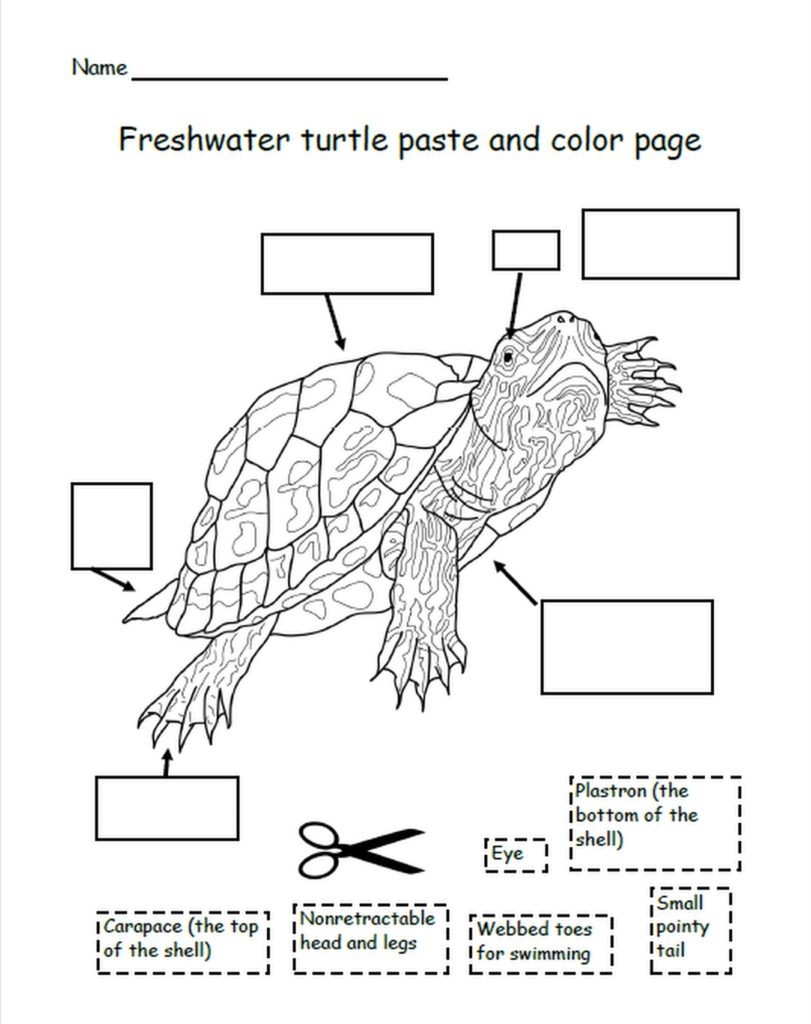 A black and white illustration of a freshwater turtle, with arrows pointing to the turtle body parts