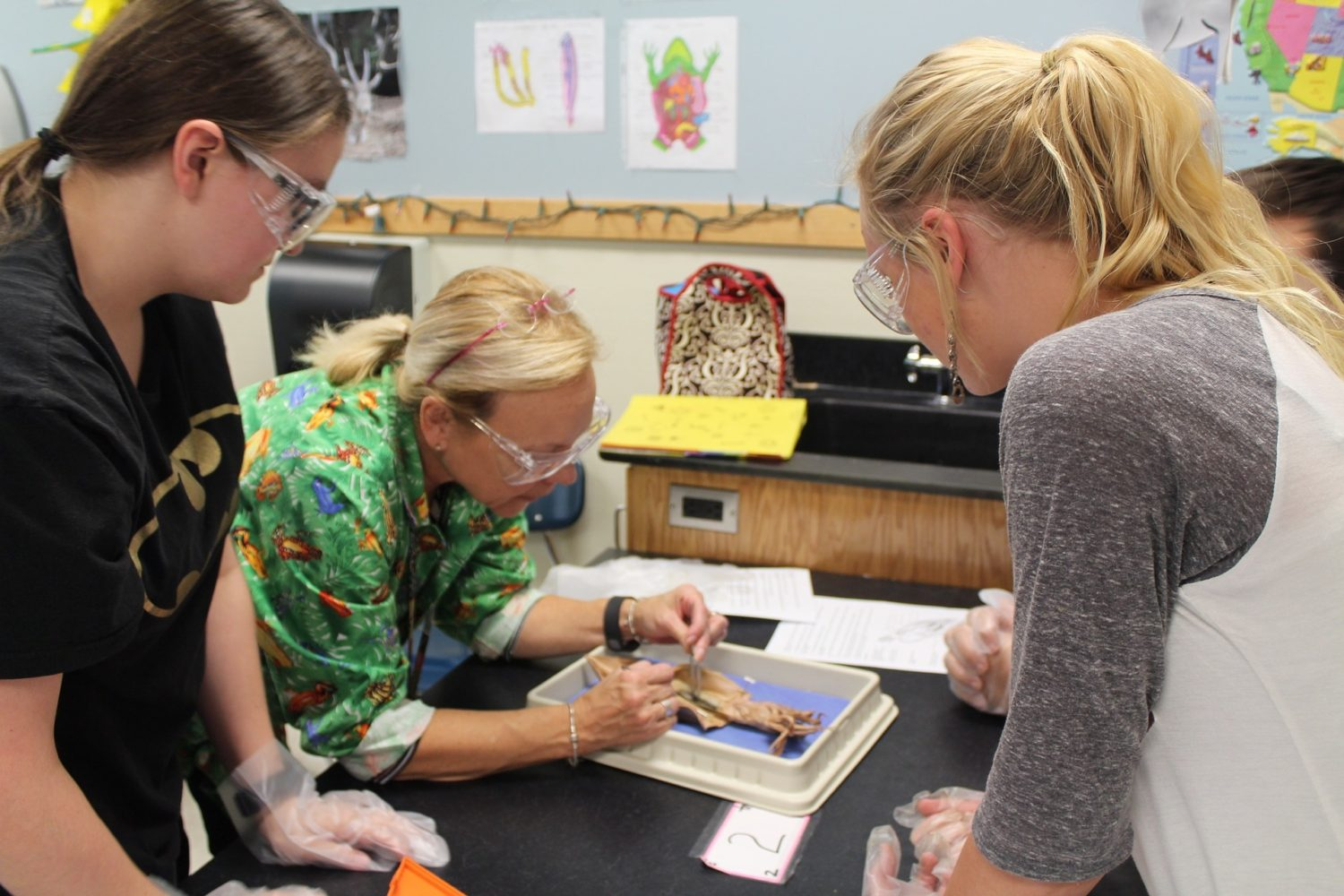 Two students watch a science teacher dissecting an animal in a tray on a table in a classroom