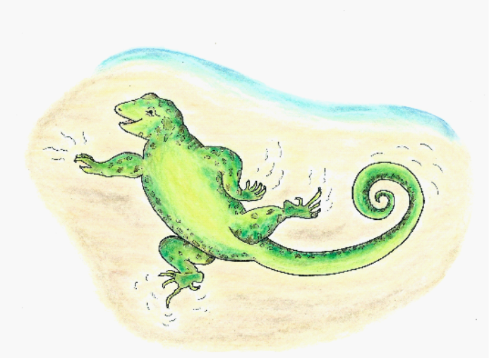 an illustration of a green curly-tail lizard from the Bahamas