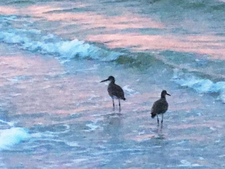 Ocean Florida coast with two birds where waves lap