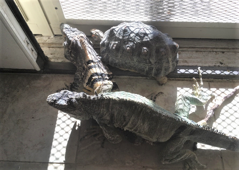 A spiny-tail iguana, a green iguana and a red-foot tortoise share the space by a screen door