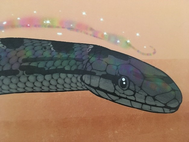 "illustration of a ""racer"" type snake"