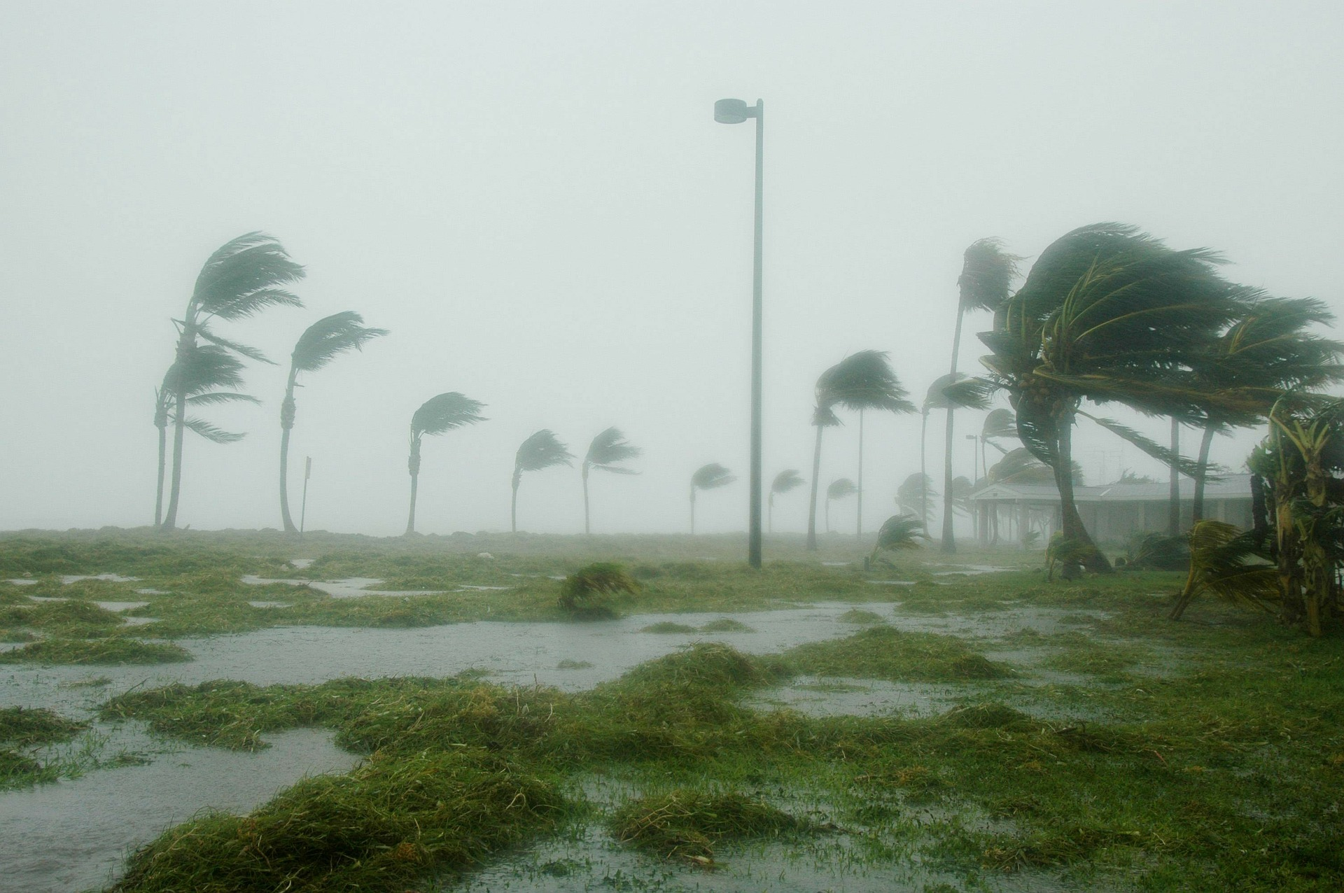 effects of hurricane winds on beach, palm trees