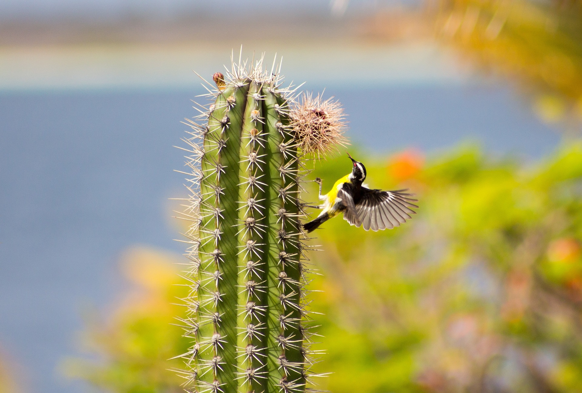 a yellow bird with brown and white wings landing on the side of a cactus