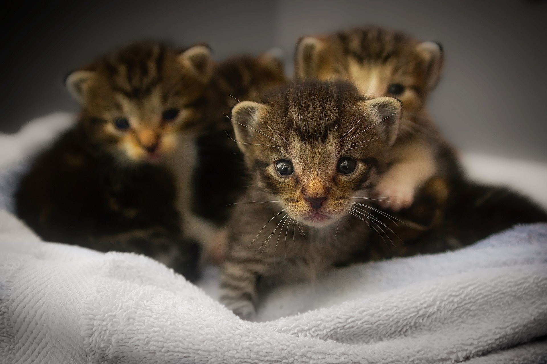 image four young kittens in a soft container