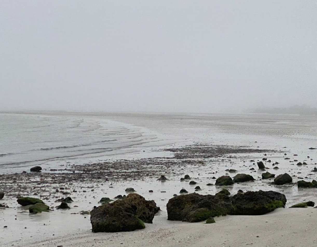 A gray, foggy day at the ocean, with white waves rolling onto the beach against black rocks