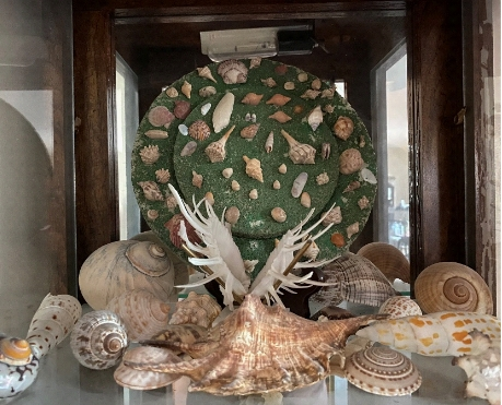 Photo of a seashell decorative element, created with many different seashells
