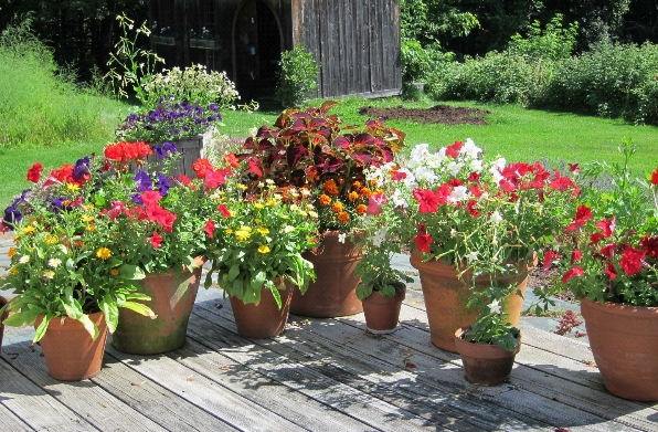 photo of flowers in pots on deck