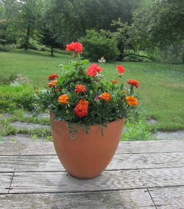 photo of a pot planted simply with one type of flower